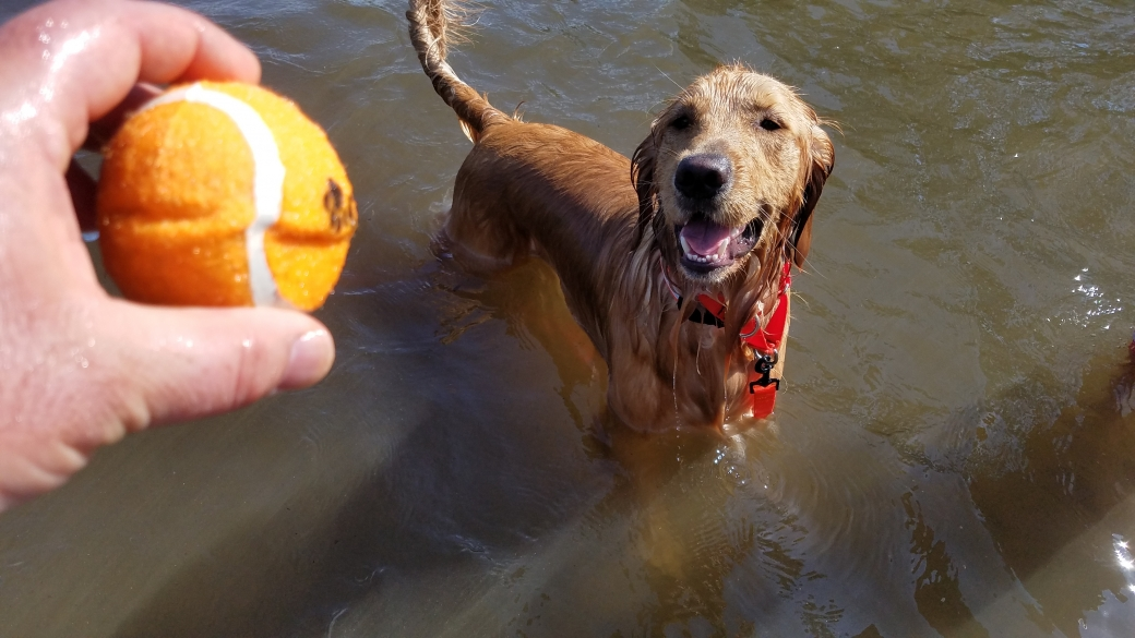 I got to take some time to play ball in the lake with my Golden Retriever. We BOTH had fun with that!