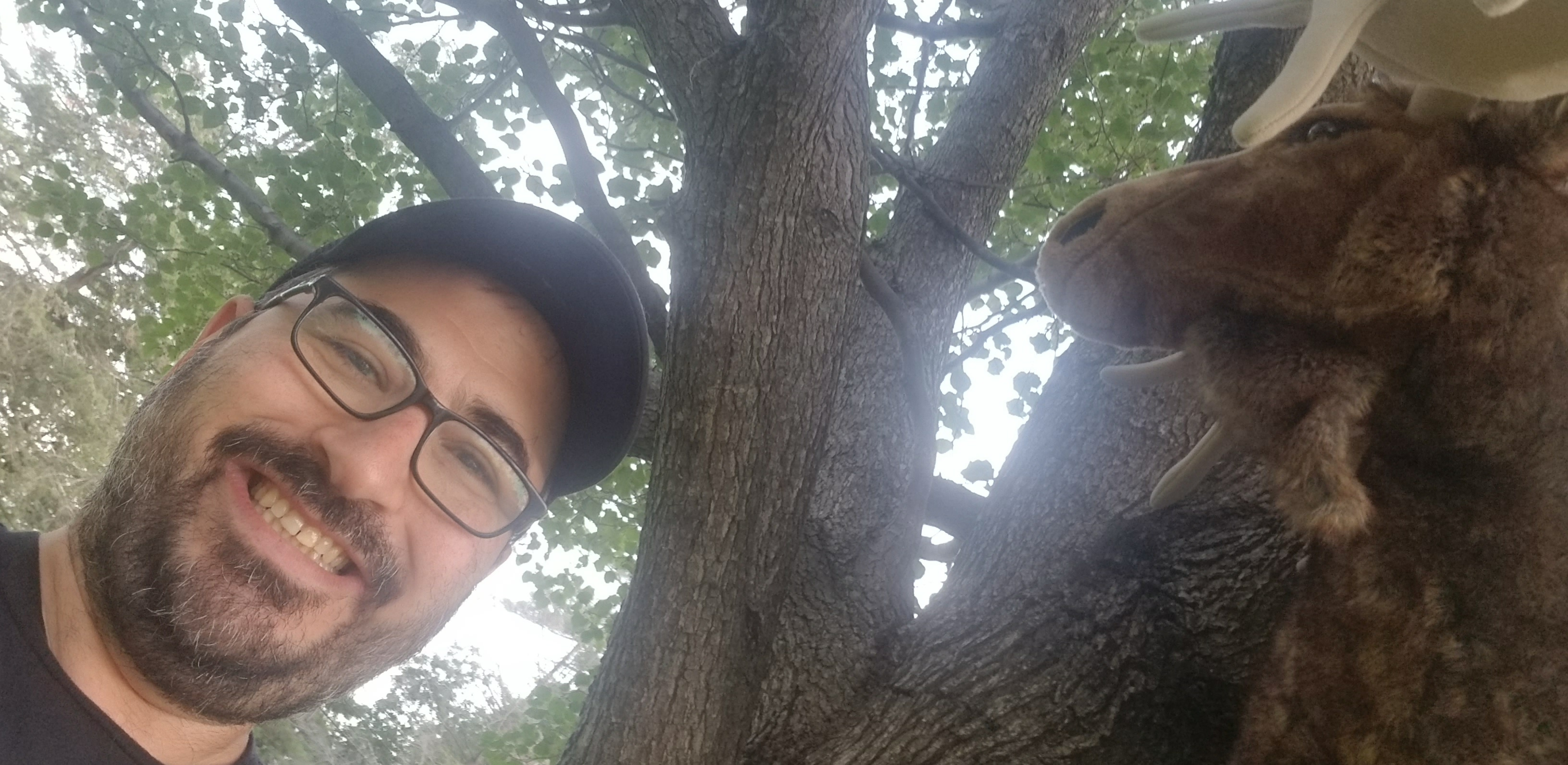 Hey, I found the Moose hiding in a tree!!!